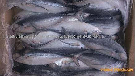 Frozen Jack Mackerel Fish