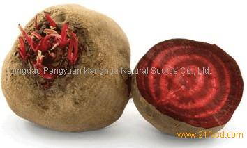 China Dried red beet root powder 80-120mesh from base plant