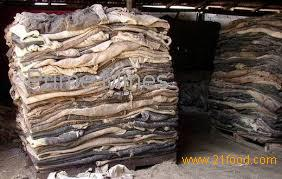 Animal Skins and Hides