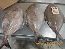 Black Pomfret Fish/ Ikan Bawal Hitam