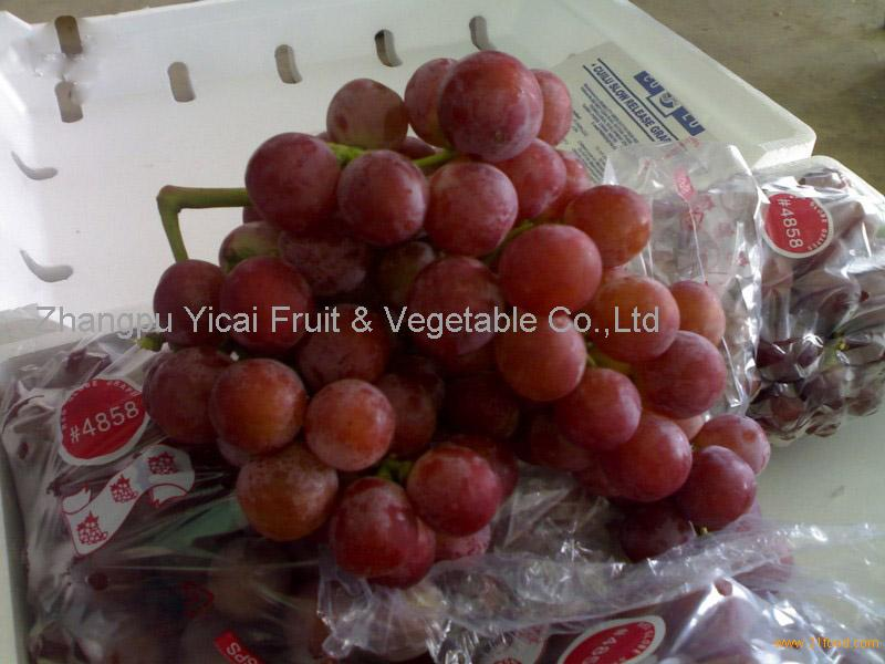 Fresh China red globe grape