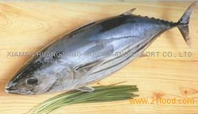 Skipjack Tuna Fish Whole Round All Size