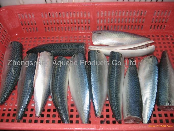 pacific mackerel HGT