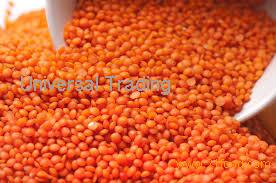 RED LENTILS for sells