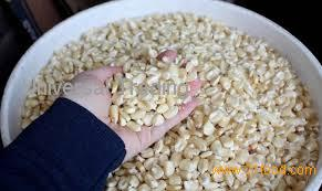 WHITE CORN fo consumption