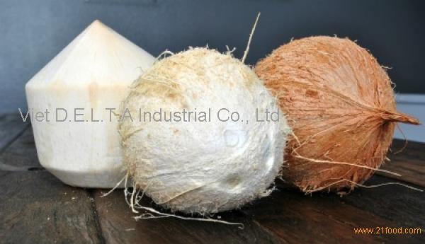 Husk Mature Coconut / Dried Whole Coconut