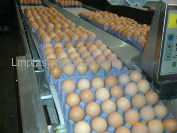 Fresh Chicken Brown Eggs, White Eggs EU Grades