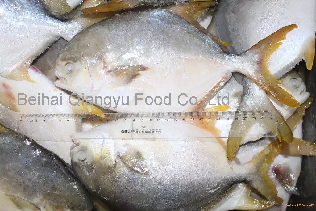 china fish farms golden pomfret