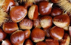 2015 High Quality Bulk Chestnut in Brazil