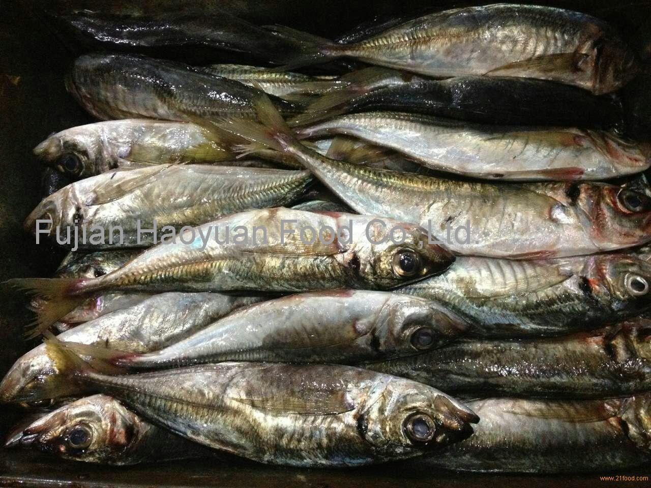 Frozen fish horse mackerel products china frozen fish for Best frozen fish
