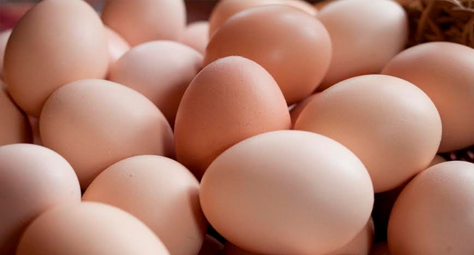 Fresh Brown Chicken Eggs Available