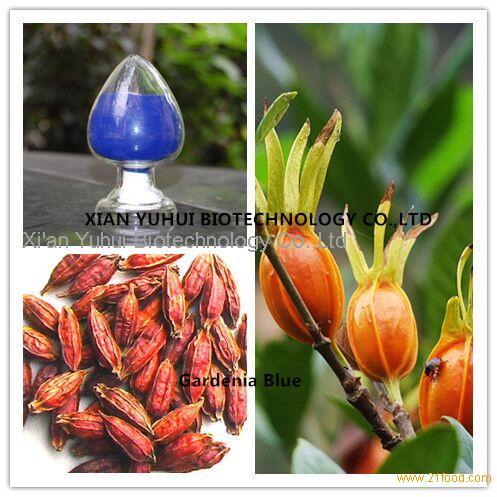Gardenia Blue