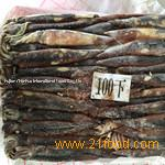 sea frozen illex squid for tuna bait from China