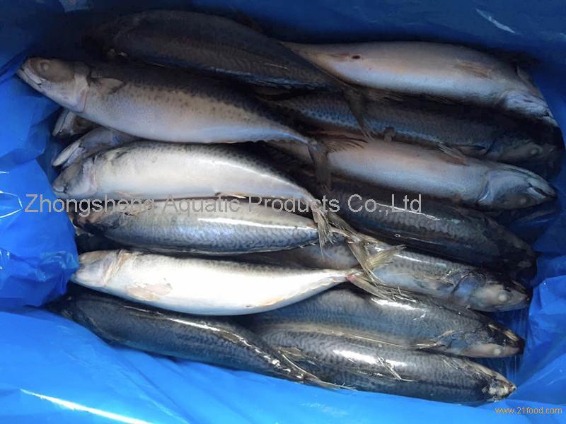 500g mackerel