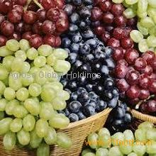 High Quality Fresh Seedless Grapes