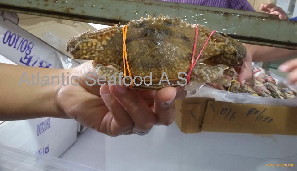 blue Swimming king crab,king crab,brown crabs, king crab legs, snow crab legs