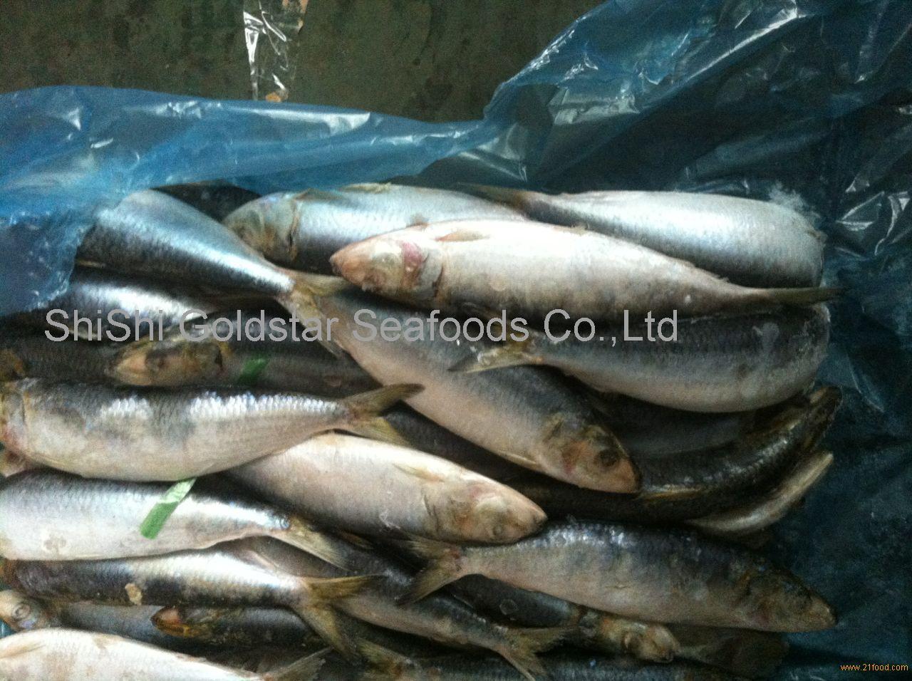 Fish sardines frozen sardine whole foods best sardine in for Best way to freeze fish