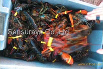 Fresh Frozen Surimi Lobsters,Green Lobsters,Lobsters Tail