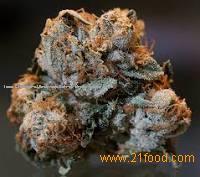 Medical marijuana / coke / research chemicals