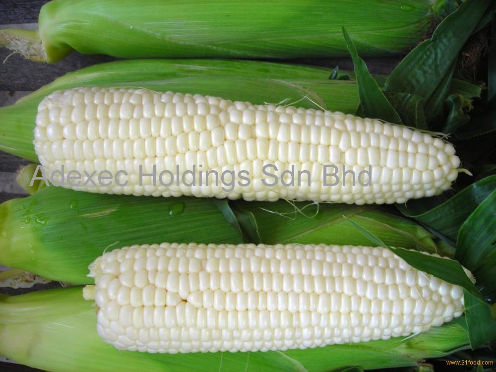 White Corn Seeds