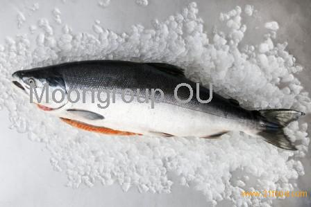 salmon sub products (by products)