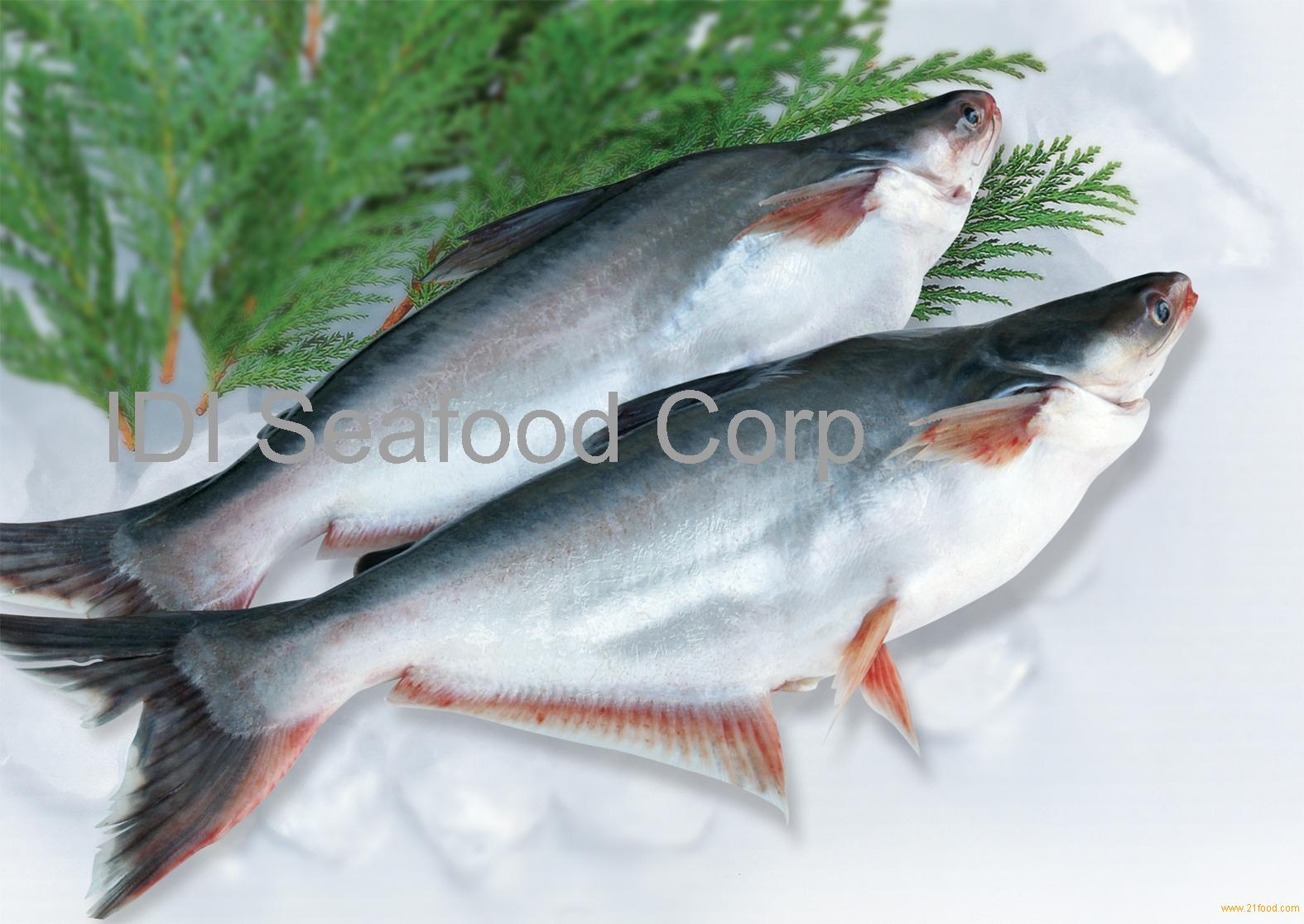 Whole round pangasius products vietnam whole round for What is swai fish