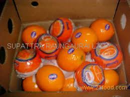 High Quality Sweet Fresh mandarin orange/Fresh Orange, Naval Orange, Valencia Oranges