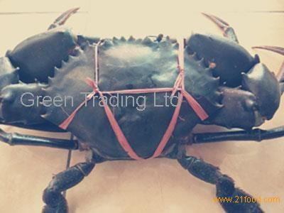 Sell live green mud crab