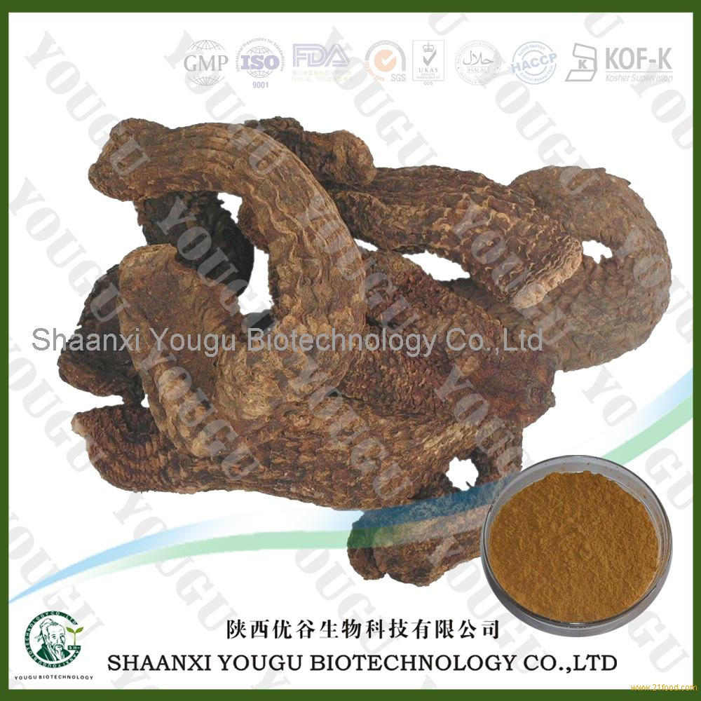 Cistanche tubulosa Extract Glycosides, Echinacoside,Acteoside