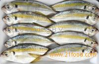 Frozen Sea Food Bonito Fish