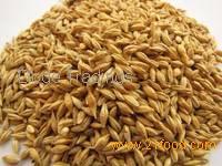 Feed Barley Grain , Red Millet, Green Millet,Sorghum