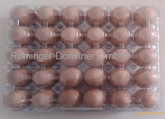 Fresh Chicken Brown/White Eggs Grade A