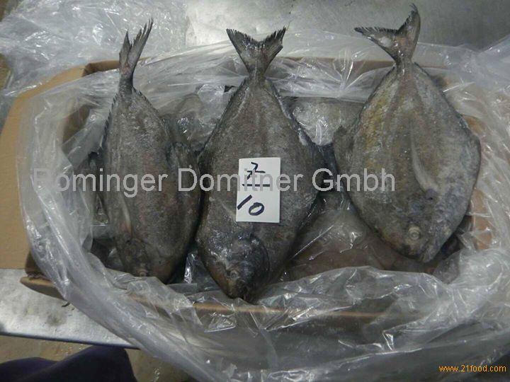 Frozen Seafoods, FROZEN BLACK POMFRET