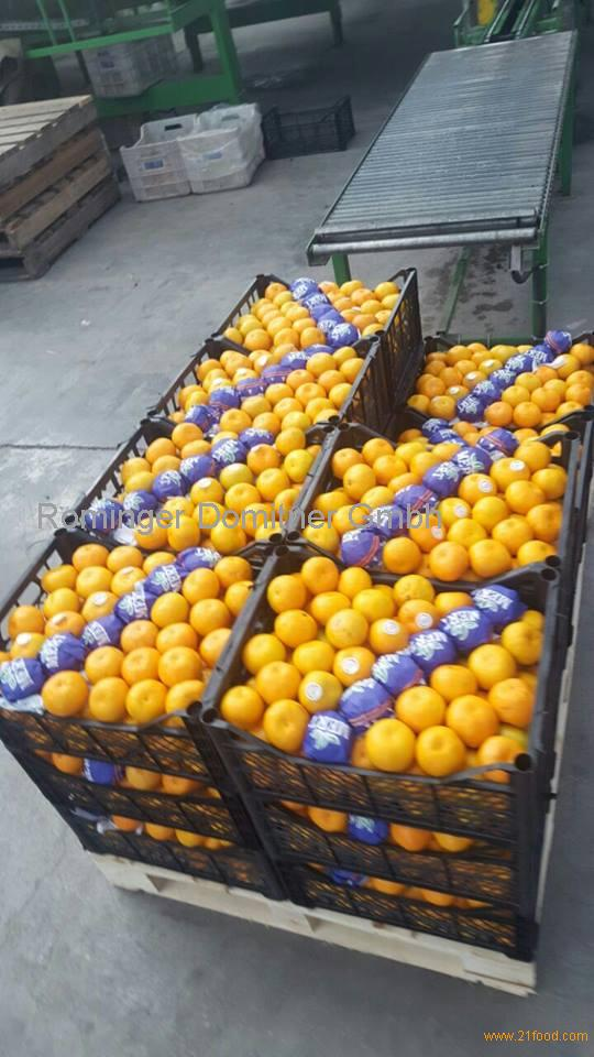 Iranian Fresh fruits 2017 for export