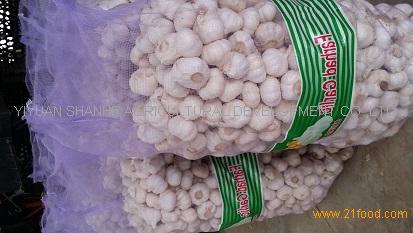 quality garlic