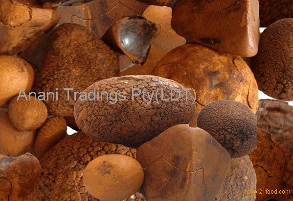 OX /CATTLE/COW GALLSTONE