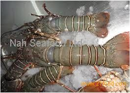 Frozen Sea Food Surimi Lobsters,Green Lobsters,Lobsters Tail and Slipper Lobsters products ...