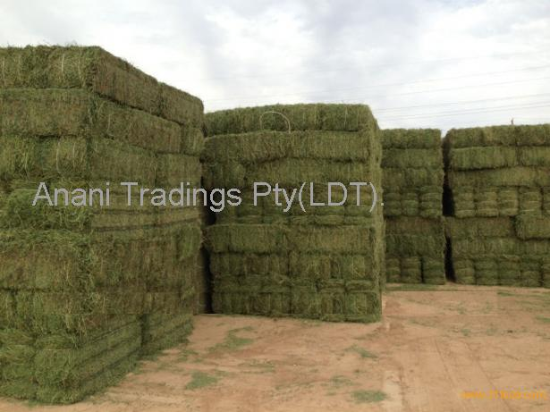 Alfalfa hay, fish meal, bone meal, yellow corn animal feed, blood meal