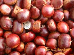 Chestnut for sale