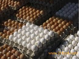 Fresh Table Chicken Egg White and Brown size 40g-50g-60g-65g-70g Available