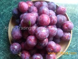 IQF Frozen style fresh plum wholesale