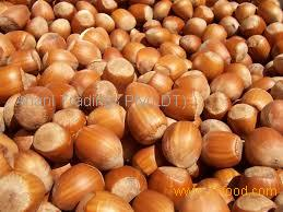 100% organic and natural Hazelnuts cheap price