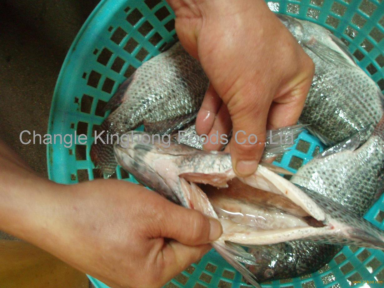 Frozen Black Tilapia Gutted Scaled