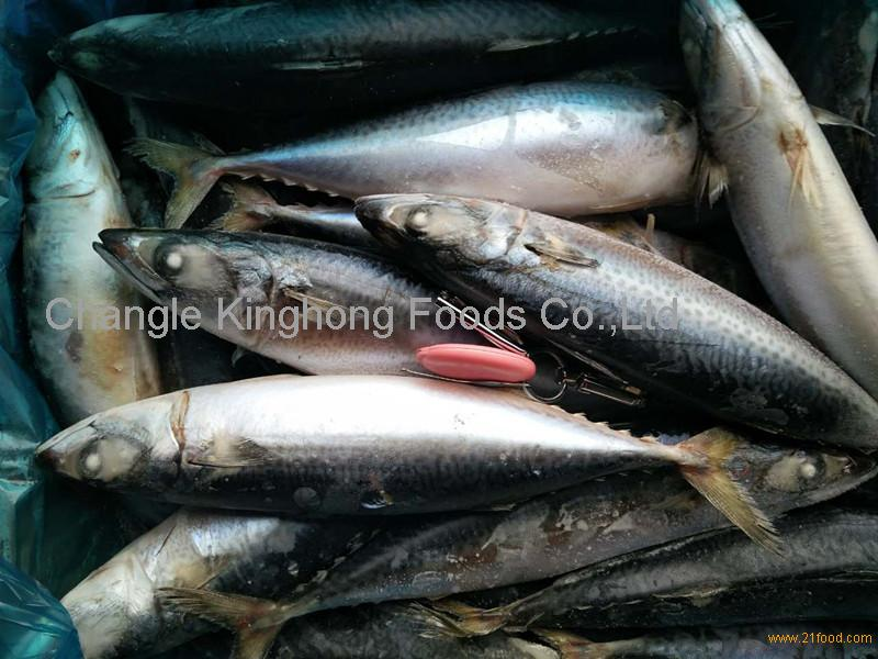 Pacific Mackerel 400-600g