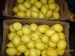 Fresh yellow and green adalia lemon/ seedless lemon