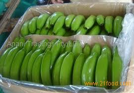 Fresh banana/ green banana/ cavendish banana high quality from