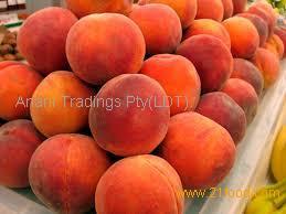 Fresh Peaches suppliers