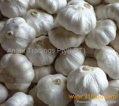 Fresh White and Rose Garlic