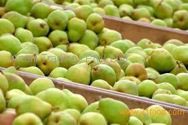 ya pear/pear farm/pear fruit fresh