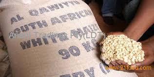 NON-GMO Grade A White Corn/Maize for Sale